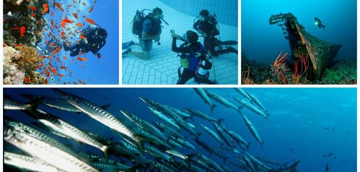 Immersioni subacquee, corsi e divertimento