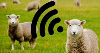 wifi pecore